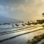vietnam-riziere